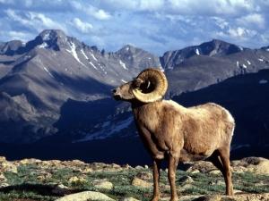 Colorado Rocky Mountain Park