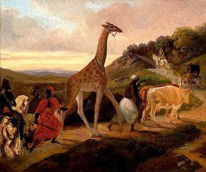 giraffe Zarafa jardin des plantes