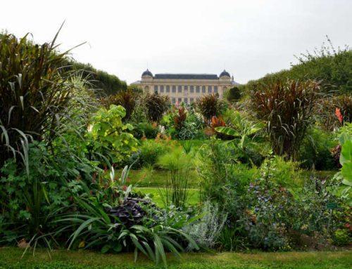 Le jardin des plantes et son histoire